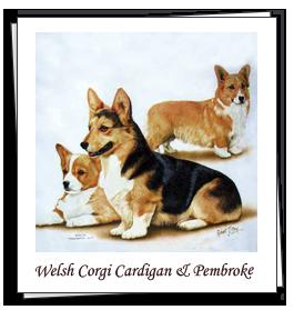 Welsh Corgi Cardigan & Pembroke